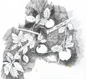 Purloined Apples
